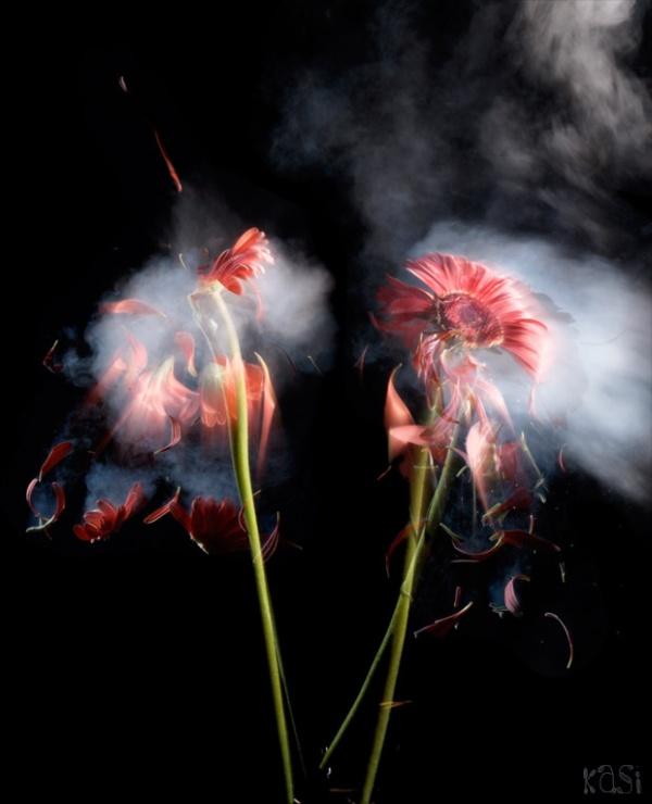 flores nitrogenio liquido flick kasi metcalfe