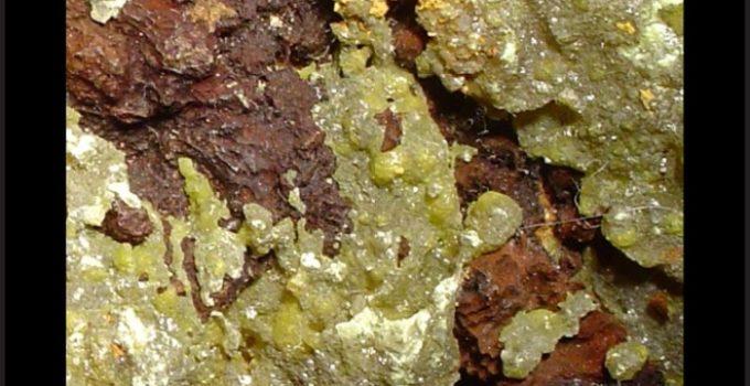 Iodo no mineral iodargirita